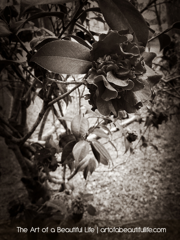 azalea-park-summerville-0232