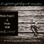 Photo Project: Photo Walk - Saturday in the Park | artofabeautifullife.com