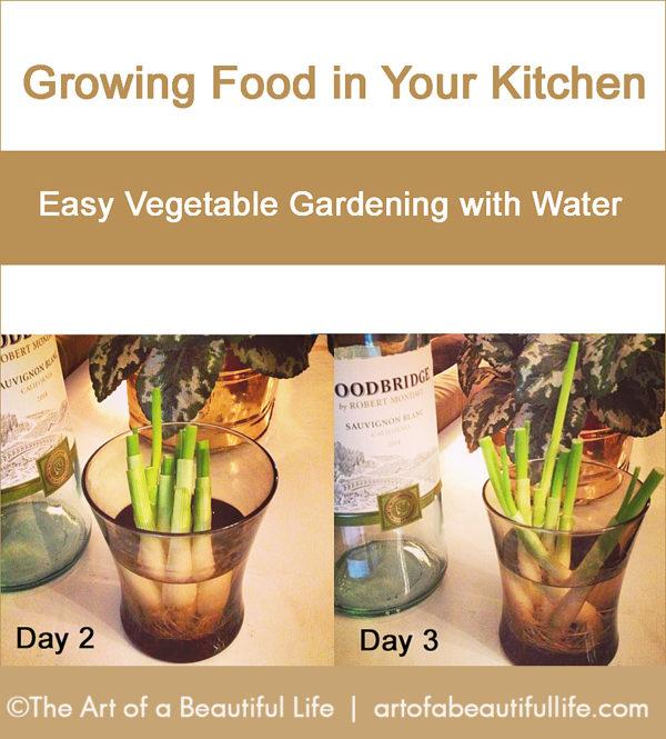 Kitchen Garden in Water - Hydroponics