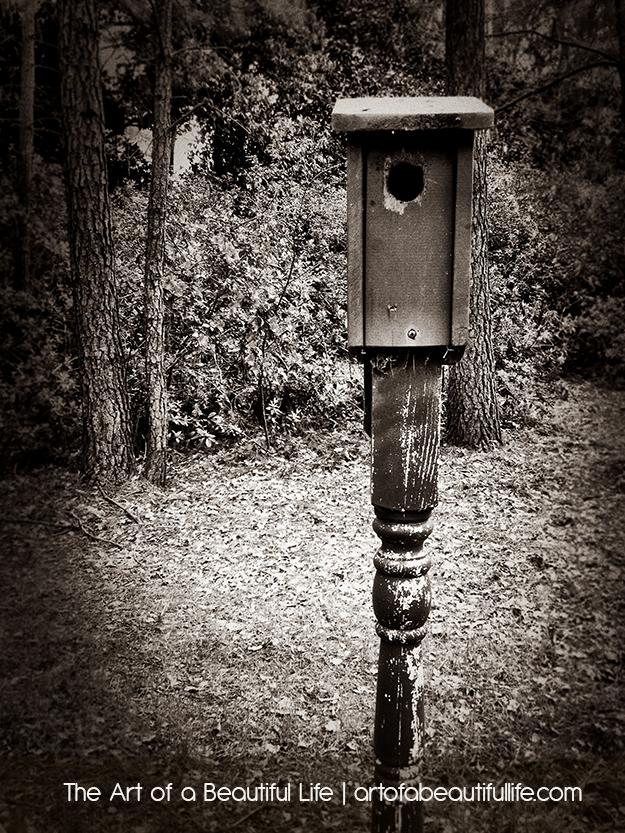 birdhouse-0180